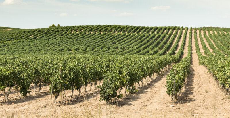 suelos vino
